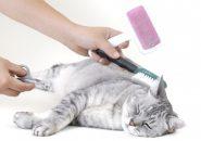 как правильно ухаживать за кошкой
