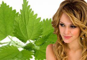 полезные свойства крапивы для волос
