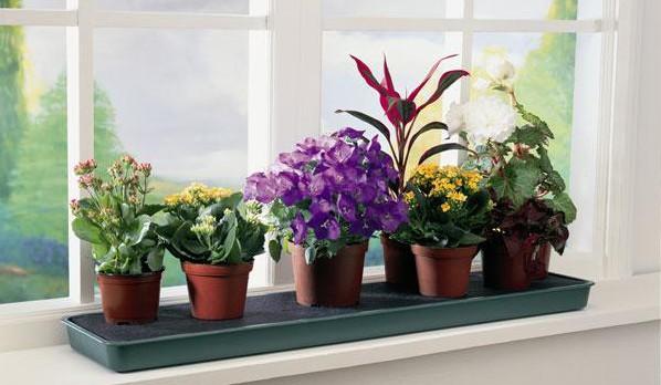 идеальное место для цветов